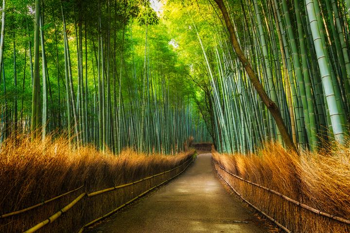 large_arashiyama1